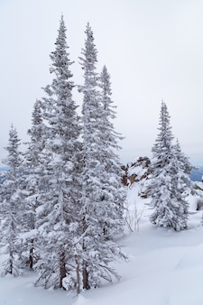 Paisaje invernal con arbol y nieve. árboles cubiertos de nieve en las laderas de la montaña.