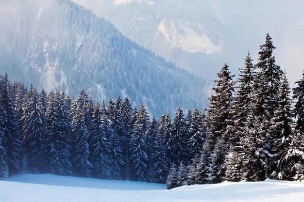 Paisaje invernal con árboles cubiertos de nieve con vistas a las montañas en mayrhofen, austria