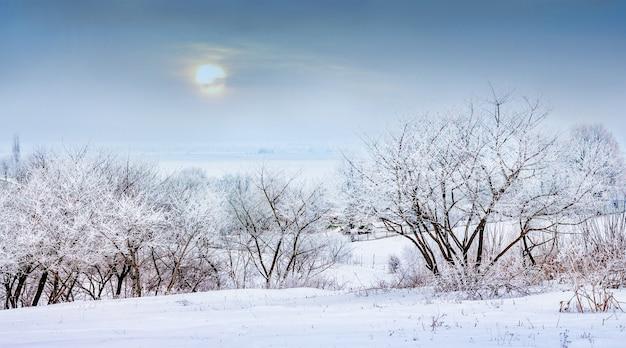 Paisaje invernal con árboles nevados antes del atardecer_