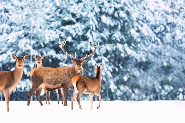 Paisaje invernal de vida salvaje con ciervos nobles