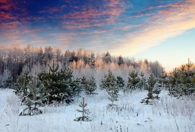 Paisaje de invierno en el amanecer