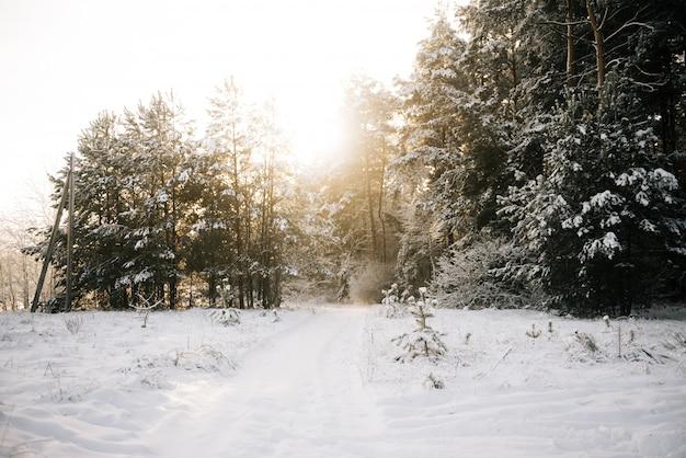 Paisaje de invierno árboles cubiertos de nieve al atardecer
