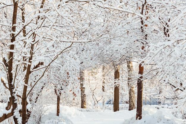 Paisaje de invierno helado. árboles en la nieve