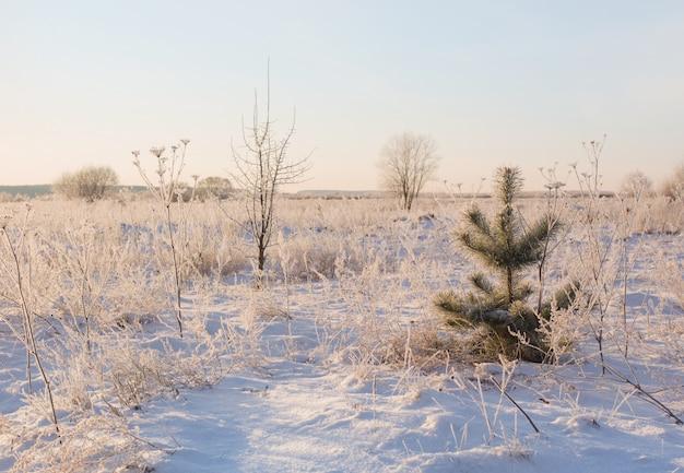 Paisaje de invierno en la nieve