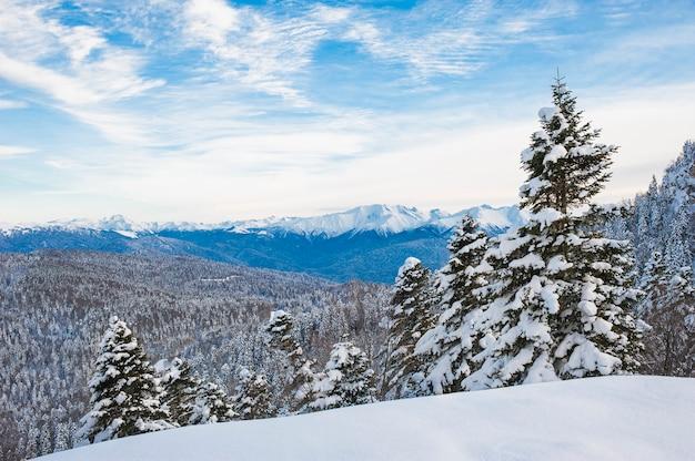 Paisaje de invierno rastro en nieve de navidad. día nublado bosque de montaña