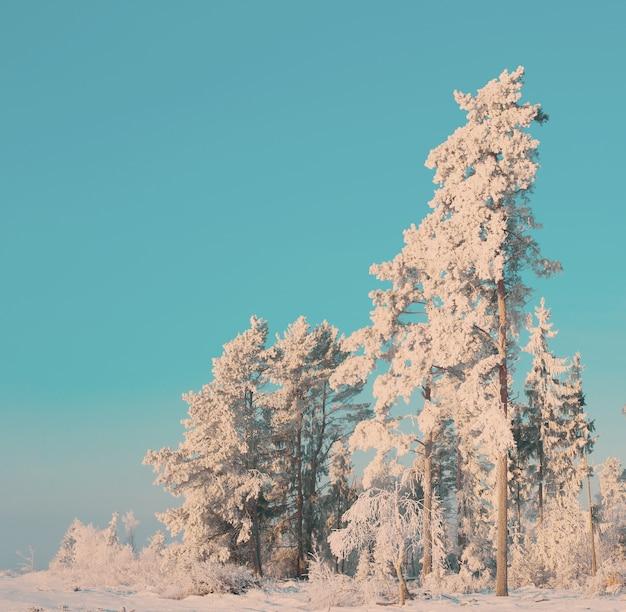 Paisaje de invierno soleado