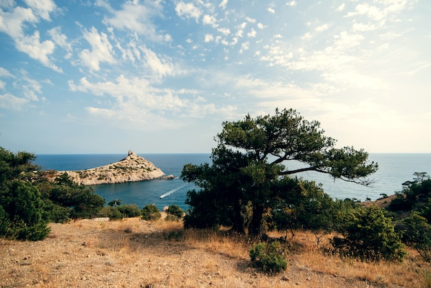 Paisaje de mar con pinos y montañas bajo un cielo azul claro