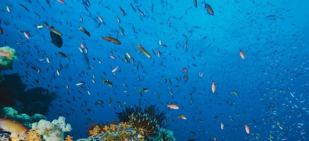 Paisaje marino panorámico de peces tropicales
