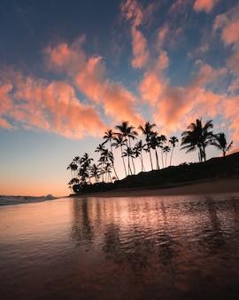 Paisaje marino con siluetas de palmeras y nubes rosadas