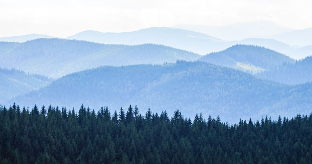 Paisaje de montaña con bosque y cielo azul