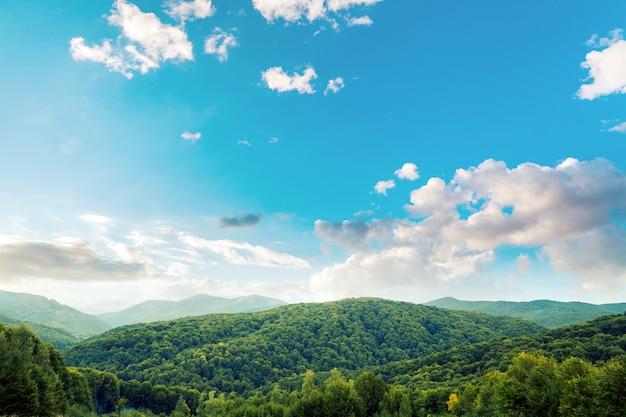 Paisaje de montaña, bosque de pinos