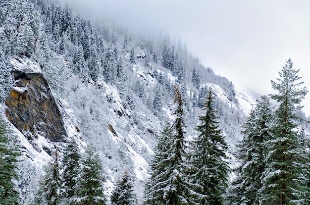 Paisaje de montaña de invierno - una vista de las montañas, cubierto de pinos y nieve.