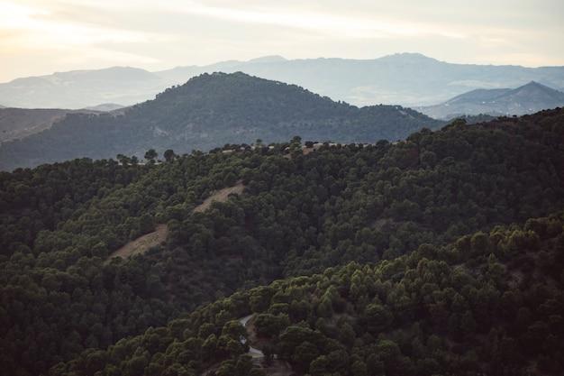 Paisaje de montañas con bosque lleno de gente