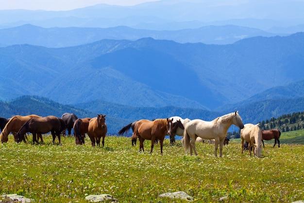 Paisaje de montañas con caballos