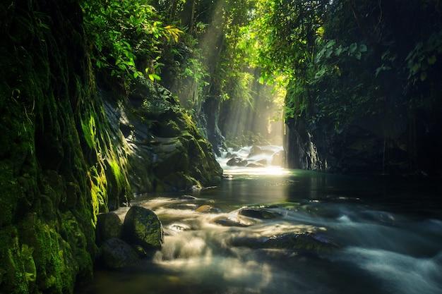 Paisaje natural de bosque tropical con agua corriente y paisaje de sol de la mañana
