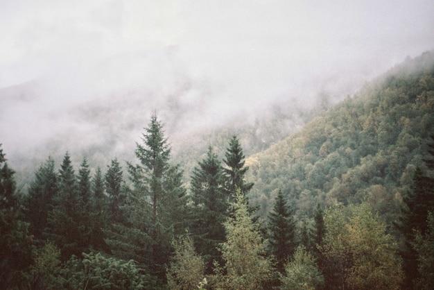 Paisaje natural de montañas y bosques.