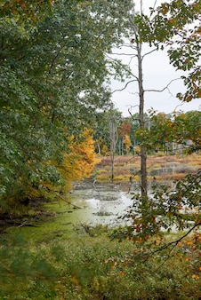 Paisaje de la naturaleza en un día de otoño.