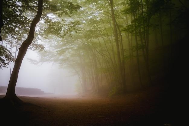 Paisaje de niebla
