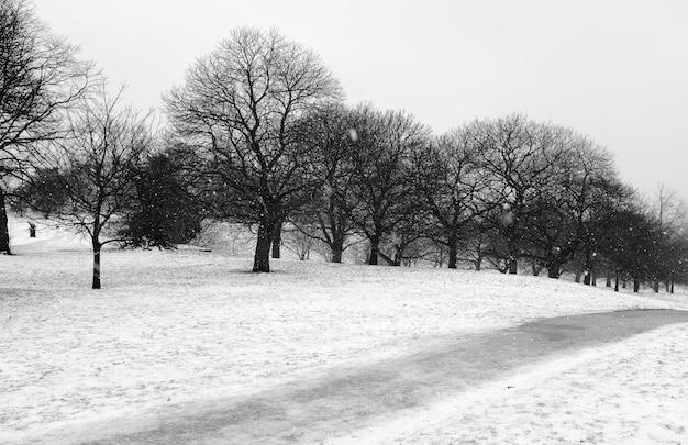 Paisaje con nieve en blanco y negro.
