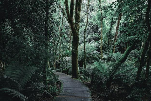 Paisaje oscuro de un sendero forestal con tablas de madera.