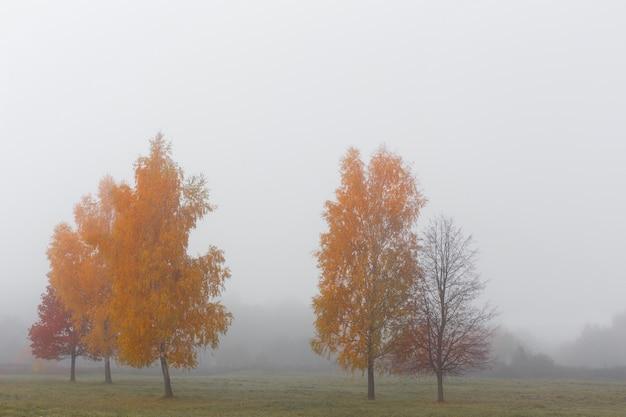 Paisaje otoñal con niebla