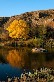 Paisaje otoñal con río y gran árbol amarillo