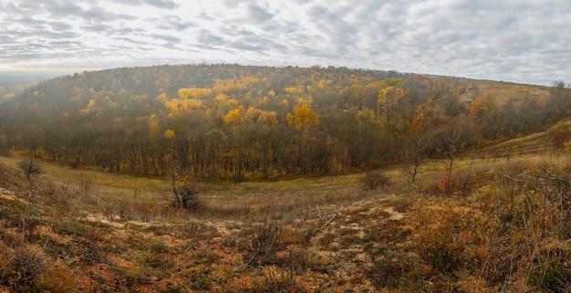Paisaje otoñal. vista del bosque con follaje amarillo con el telón de fondo de un cielo nublado.