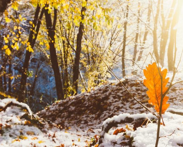 Paisaje de otoño invierno, los rayos del sol naciente y la primera nevada en el bosque otoñal de la mañana