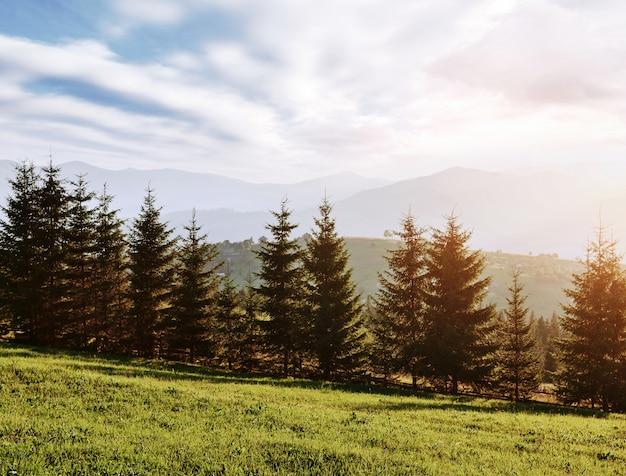 El paisaje de otoño de montaña con bosque colorido. escena dramática de la mañana. hojas de otoño rojas y amarillas. lugar de ubicación cárpatos, ucrania, europa