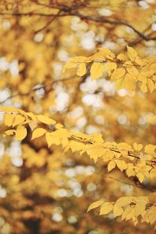 Paisaje de otoño paisaje del bosque del otoño en un día soleado con el fondo de las hojas de arce.