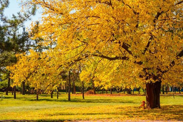 Paisaje de otoño real
