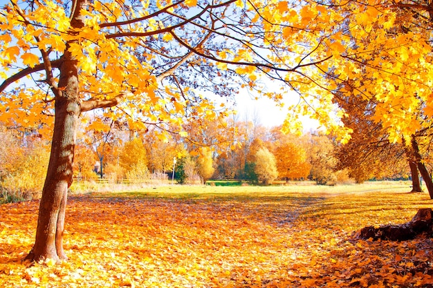 Paisaje de otoño.