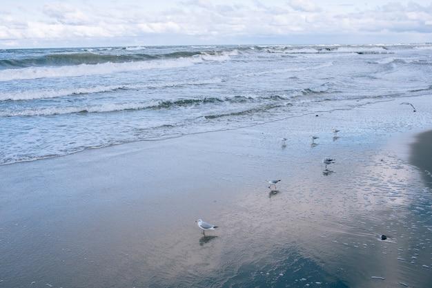 Paisaje de playa con mar azul y gaviota
