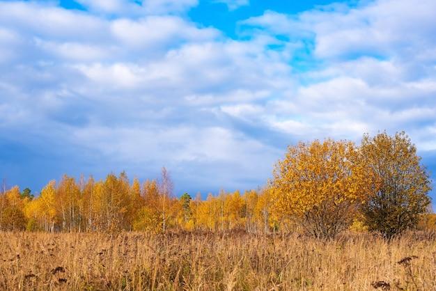 Paisaje de pradera con pastos, prados, árboles y un cielo azul brillante con nubes blancas.