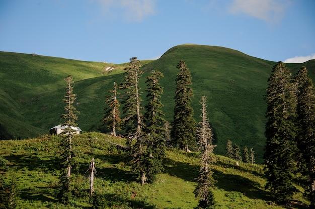 Paisaje de pradera con pinos y edificio