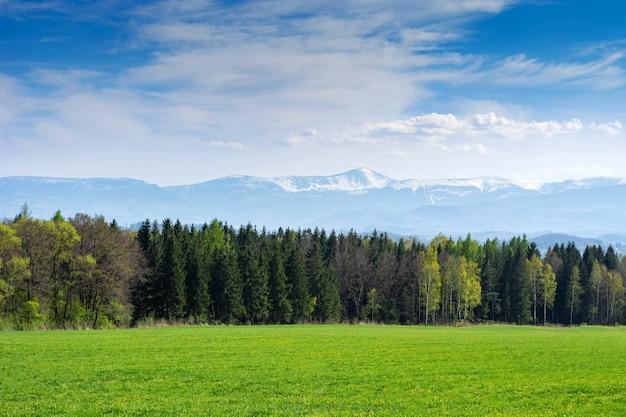 Paisaje de primavera campo de avena sembrada, bosque y montañas.