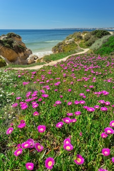 Paisaje de primavera vertical playa gale. albufeira portugal.