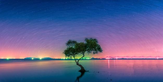 Paisaje con el rastro de estrella sobre el árbol de manglar de silueta en el mar