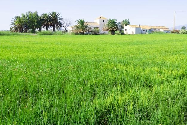 Paisaje rural con campos de arroz