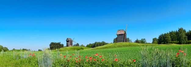 Paisaje rural con molinos de viento históricos detrás del campo de trigo en primavera con flores de amapola naranja en frente