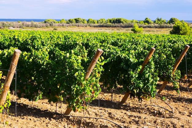 Paisaje rural en planta de viñedos