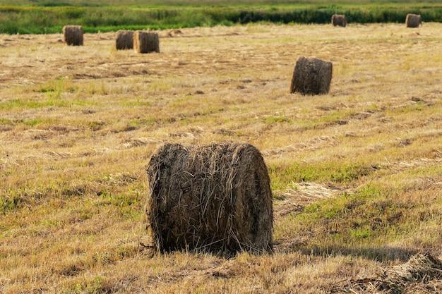 Paisaje rural, vista de heno dorado rollos en campo segado en día soleado, clima seco muy adecuado para trabajos agrícolas.