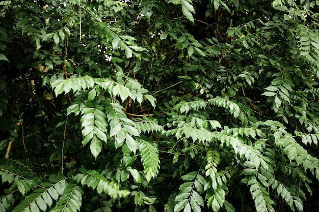 Paisaje de la selva tropical