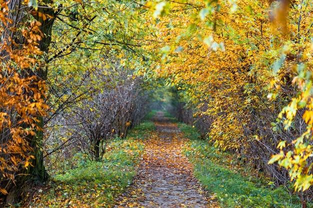 Paisaje del sendero del parque de otoño