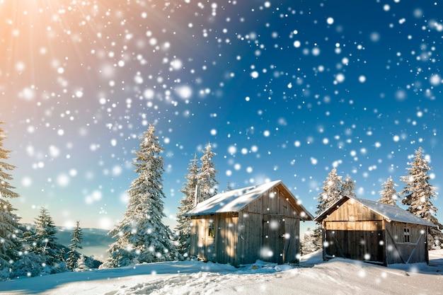 Paisaje soleado de invierno de cuento de hadas. dos cabañas de pastor de madera desgastada en la montaña nevada claro entre pinos en el fondo de copyspace de cielo azul brillante. feliz año nuevo y feliz navidad.
