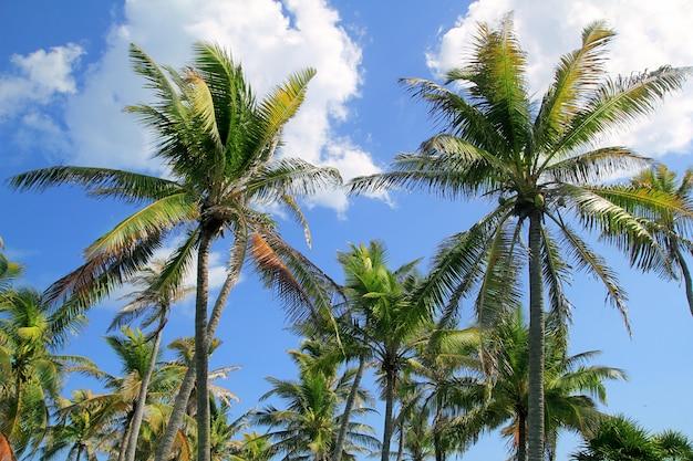 Paisaje típico tropical de palmeras de coco