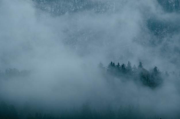 Paisaje de tormenta de niebla sobre el bosque de pinos
