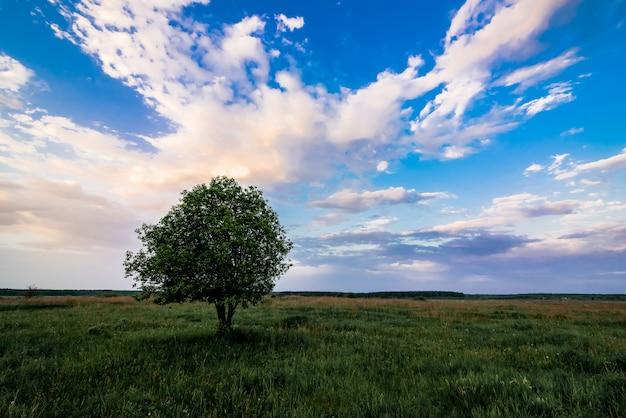 Paisaje de verano con un árbol solitario en un campo con hierba verde bajo un cielo en la mañana
