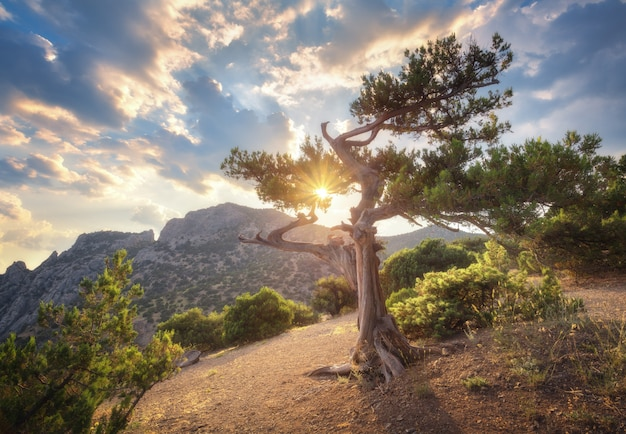 Paisaje de verano con árbol viejo
