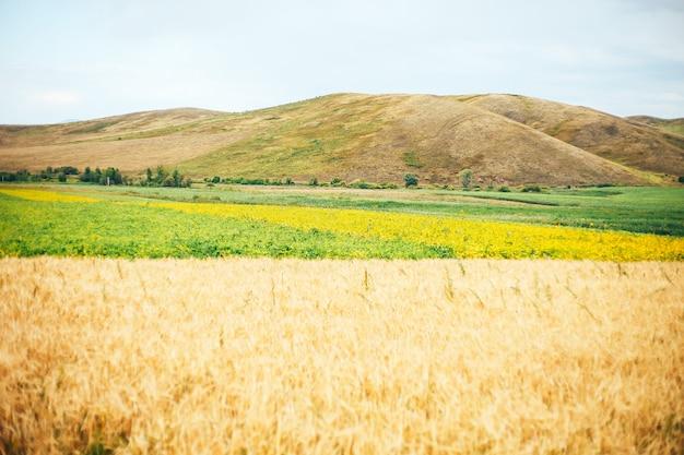 Paisaje de verano con campo de trigo y nubes
